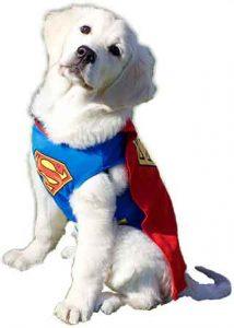 Super Freya!
