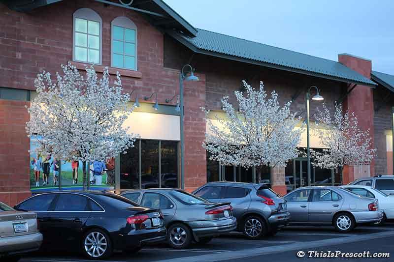 Flowering Pear Tree at the Gateway Mall in Prescott, AZ