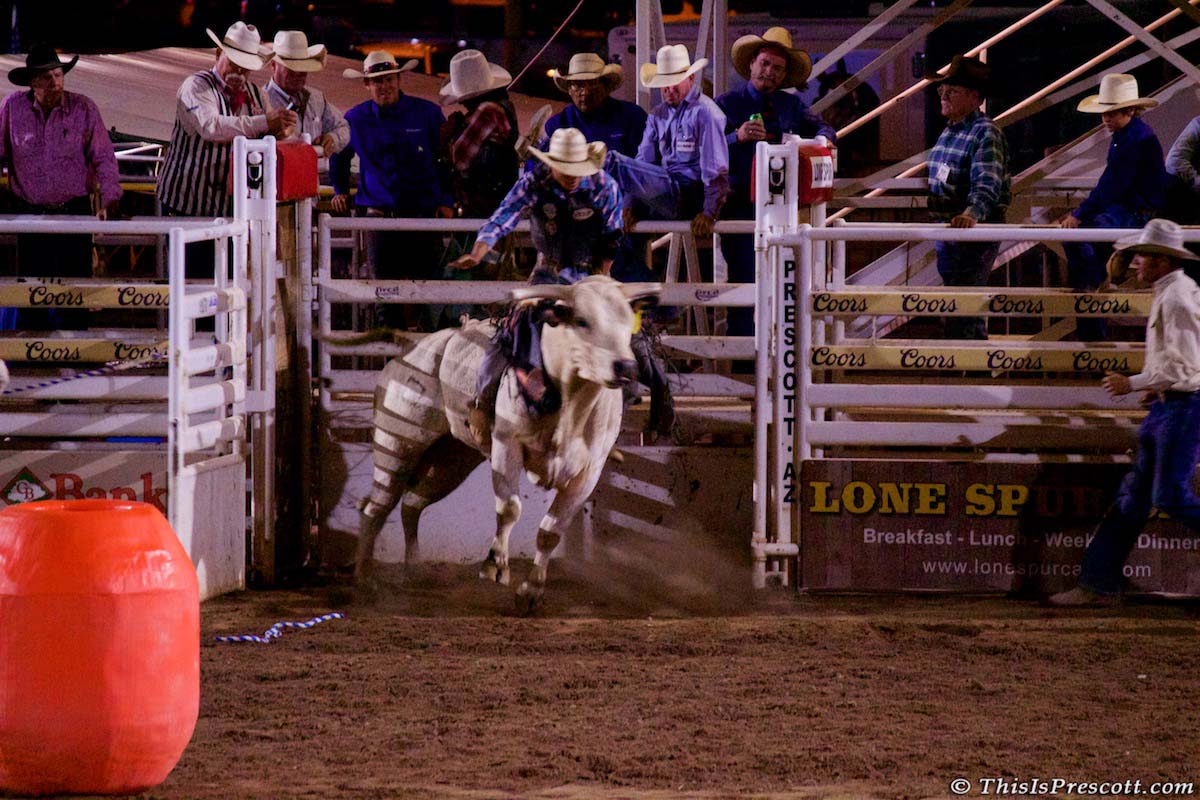 Chute opens for bull riding at 130th Annual World's Oldest Rodeo® in Prescott, Arizona on July 3, 2017.