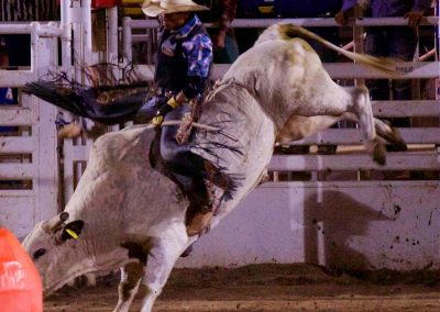 Bull riding at 130th Annual World's Oldest Rodeo® in Prescott, Arizona on July 3, 2017.