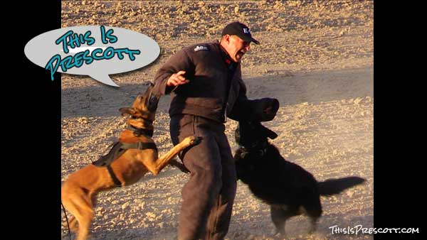 "This is Prescott! K-9 Officer and handler being ""attacked"" during a demonstration in Prescott, Arizona"